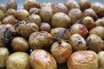 Мини-картофель в кожуре с чабрецом